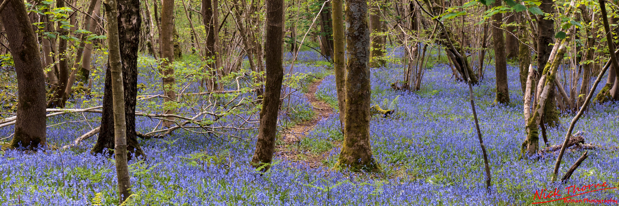 Bluebell Walk.jpg