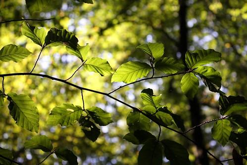 September forest XXI