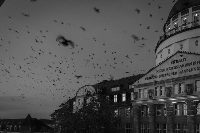 17.11.2014 The Birds
