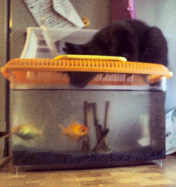 tosca e pesci