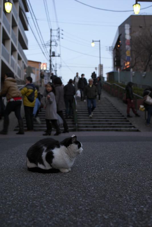 東京路地裏散歩 夕やけだんだんのネコ 日暮里・谷中・根津 2014年12月21日