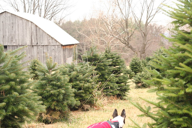 TreeHunting2014 (31)