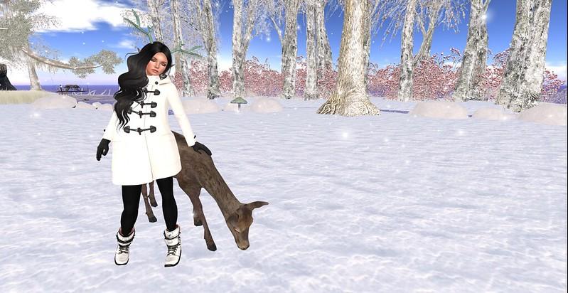 Comfort & Joy  DWAT Winter Contest