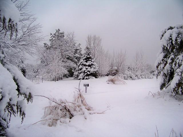 Snowbound in winter beauty.