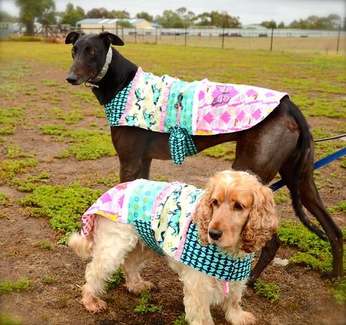 Carnaval Dog Jackets