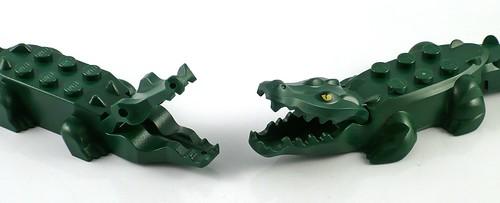 crocodile09
