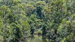 Deep Creek, Narrabeen, Sydney