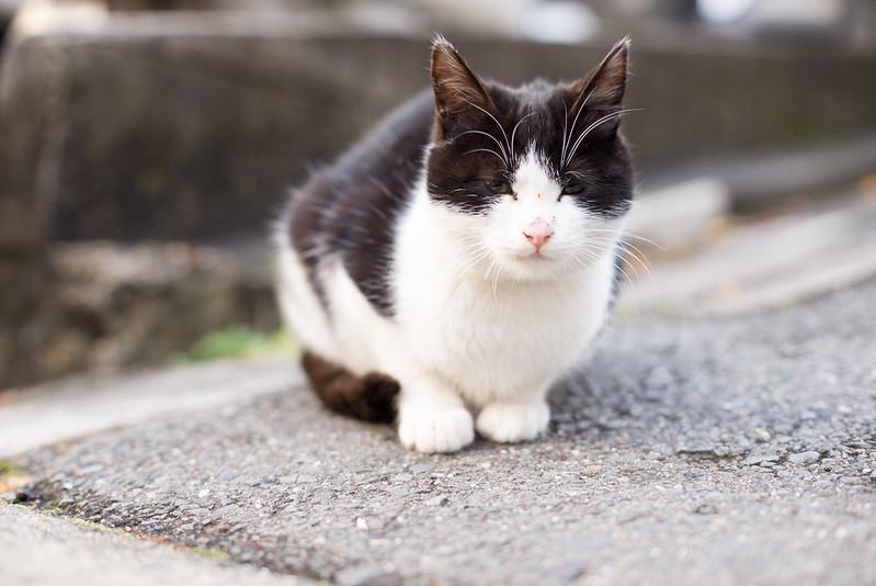 北白川 野良ネコ