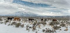 Wild Horses  _6004305
