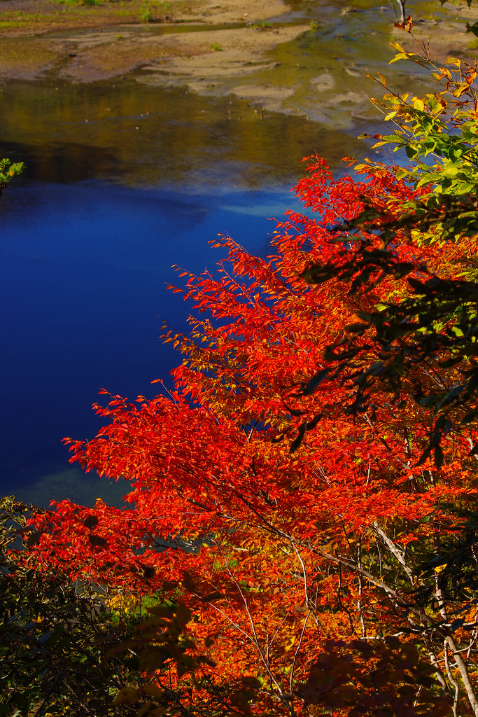日本西和賀町赤澤大瀑 早楓