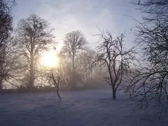 Winter sun on snow