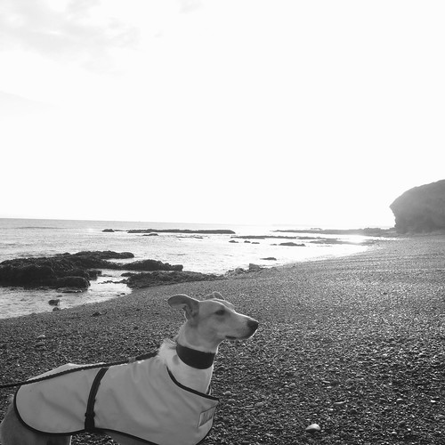 Lurcher. Dog. Sighthound. Rescue dog. Beach. Sea. Black and white.
