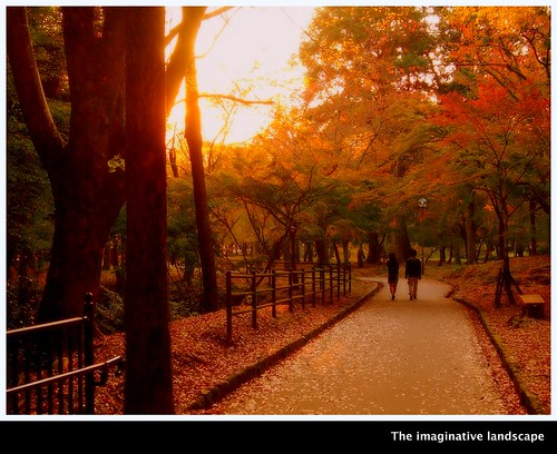 trees japan dusk path autumnleaves nara yamato 奈良 narapark 奈良公園 大和 olympuspenep3 ealabo theimaginativelandscape fuwaryôsuke