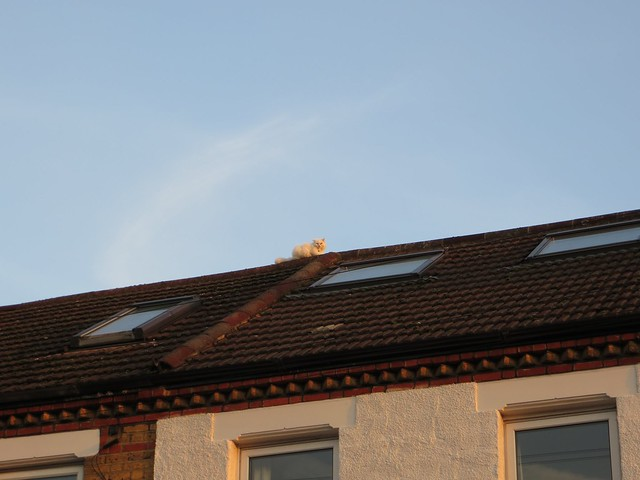 Cat on a cold tile roof