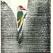 Japanese Flower and Bird Art posted a photo:Japanese art print by Toshiro Maeda (1904-1990)