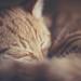 Soft Goodnight by la_cla25
