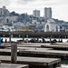 The sea lions of pier 39 by mirsasha