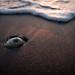 Shell by echinocactus