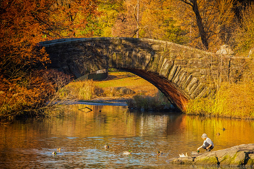 nyc newyork fall water colors yellow centralpark ducks gapstowbridge