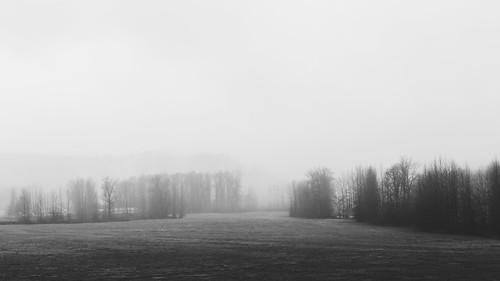 blackandwhite fog foggy nature pacificnorthwest landscape field canoneos5dmarkiii johnwestrock canonef2470mmf28lusm monochrome washington