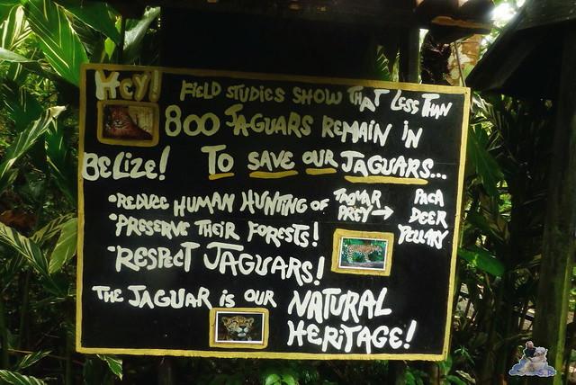 Belize Zoo 19.11.2014 116