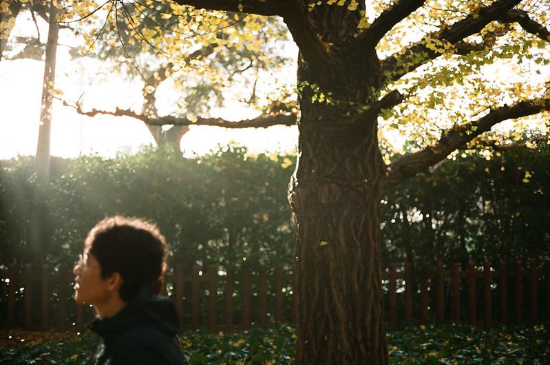 glitter memories in autumn /Meijijingu Gaien