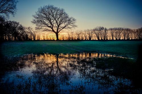 Sunset Tree Reflection