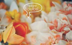 Plant Bulbs