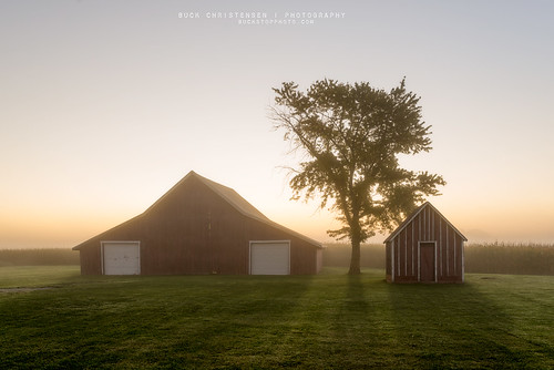 mist tree misty fog rural sunrise landscape dawn farm foggy iowa council bluffs