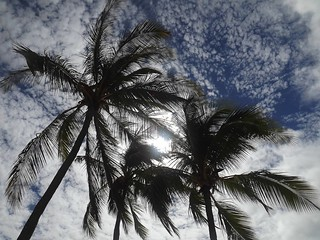 Palm Trees in the Sky