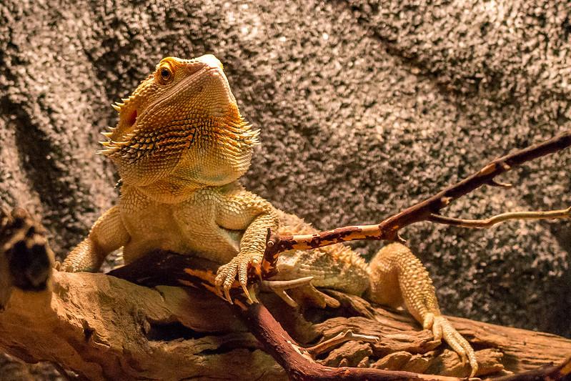 Fotos de animales de todo tipo incluyendo mascotas que más te gustan - Página 5 27261935611_371ed9bc28_c