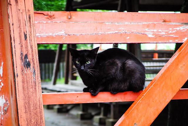 Today's Cat@2016-06-28