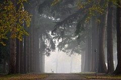 Rust op Begraafplaats Moscowa