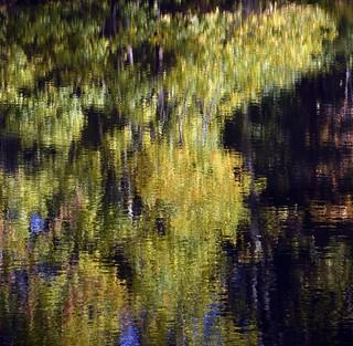 Monet Foliage