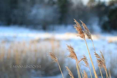 winter snow fields