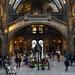 Travel   Natural History Museum   London by wazari