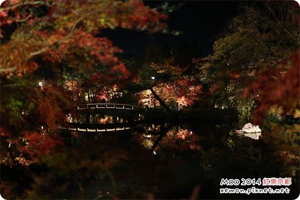 永觀堂夜楓