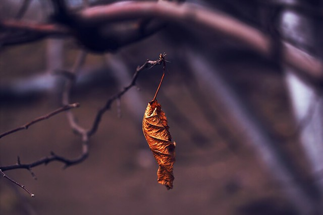 day: dry leaves