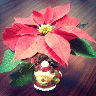 Merry & Bright... #christmas #Poinsettia #toocute #planter