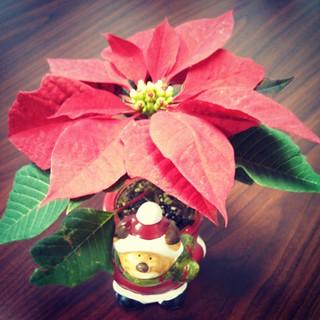 Merry & Bright... #christmas #Poinsettia #toocute #planter