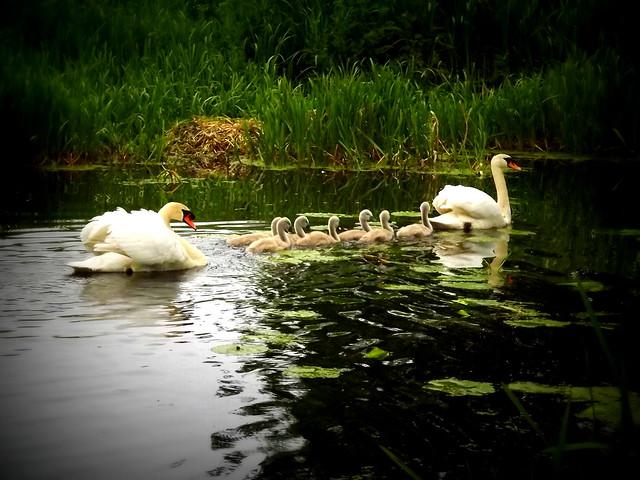Leaving the nest one, Fujifilm FinePix S3380