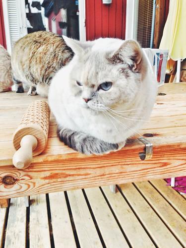cat baking roller