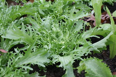 winter greens IMG_0962