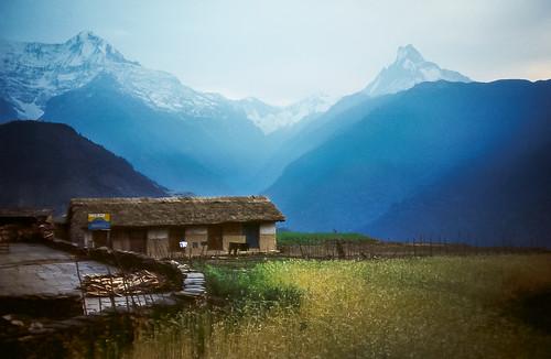 nepal himalayas buckwheat machhapuchhre ghandruk annapurnasouth premonsoonhaze