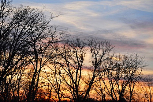 pink trees winter sunset sky orange sun white black cold nature colors clouds outside outdoors grey soft glow quiet peace sundown branches silhouettes peaceful
