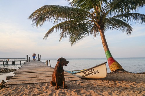 sunset dog beautiful island belize