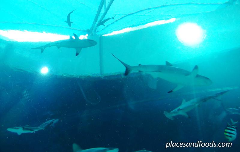 sea aquarium tube more sharks