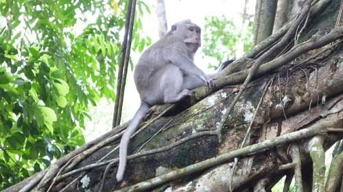 Bali-1-099