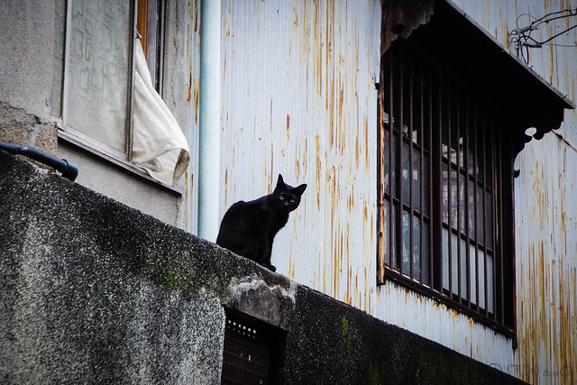 Today's Cat@2016-06-29