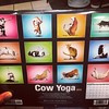 A 'Cow Yoga' calendar that my daughter wants. Hysterical.